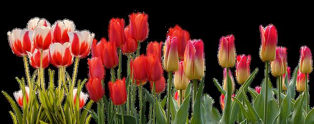Ottawa Tulip Festival Canada