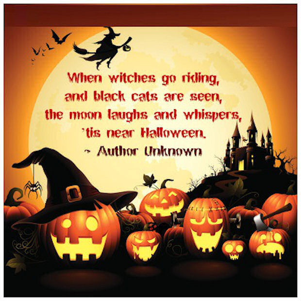 Halloween Black Cat Quotes With Images
